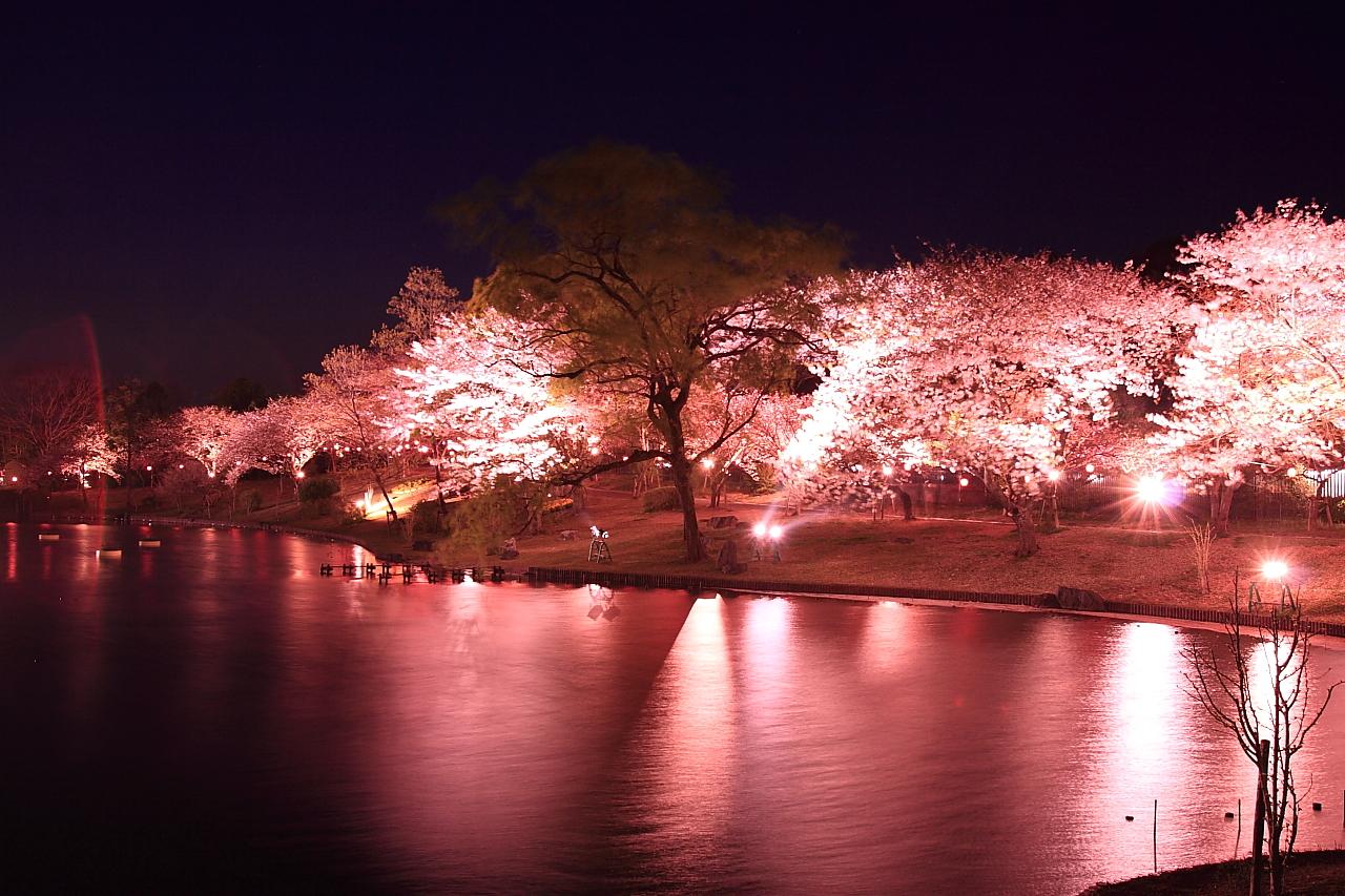 いよいよ浜名湖花フェスタ開催します!