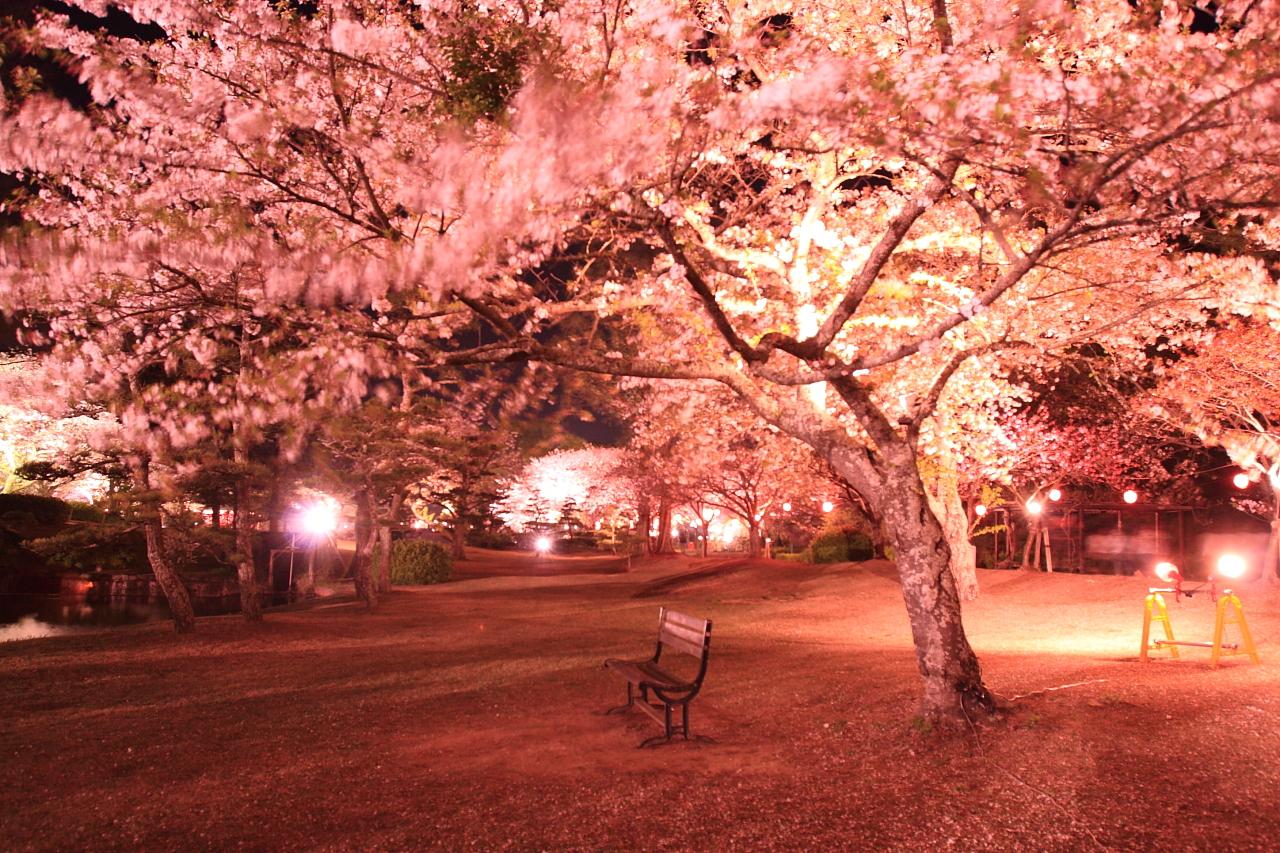 待ちに待った【浜名湖花フェスタ2017】が明日開催されます!当館お隣のはままつフラワーパークを舞台に6月中旬まで、さまざまなお花を観賞できる素晴らしいシーズン♪お花好きの方は必見です!特にご覧頂きたいのは桜とチューリップの競演。1300本の桜と50万球のチューリップが皆様をお出迎えしてくれます。また3/25~4/9までは夜桜も開催されますので、こちらも出掛けてみては如何ですか?ご宿泊頂いたお客様にはなんと夜桜入場券を無料で差し上げております。夕食の前後にでも歩いてすぐのフラワーパークへお出掛け下さいね。ご利用お待ちしております!!