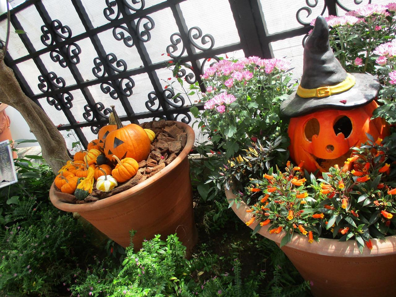 色々な場所にかぼちゃやハロウィンらしい飾りつけがしてありました!