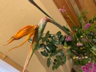 色とりどりの生け花をお届けします!