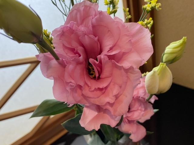 アップにした生け花です。<br /> <br /> ピンクのお花は「トルコキキョウ」です。<br /> 少しバラに似ていますよね^^;