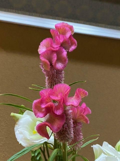 ピンクの可愛らしいお花ですよね(⌒∇⌒)